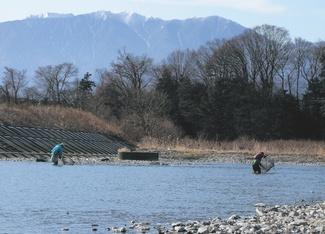 天竜川のざざむし漁